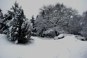 Snow falls on a Maine island. Nathaniel Hammond photo