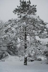 An island tree after a recent snowfall. Photo copyright Nathaniel Hammond