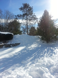 Aftermath of the blizzard of 2105 on a small Maine island.  Photo (C) Karen Hammond